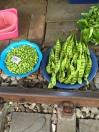 PeaPodsStreetMarketBangkok