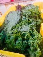 Kale and Mixed Greens